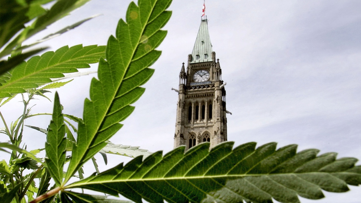 decriminalization of marijuana in canada essay Access to over 100,000 complete essays and and i will prove that marijuana decriminalization would not lead to marijuana should be legalized in canada.