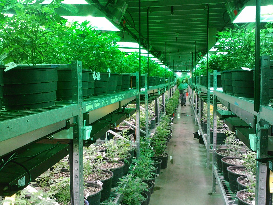 Canadian Marijuana Stocks Have US Investors Looking At F Stocks